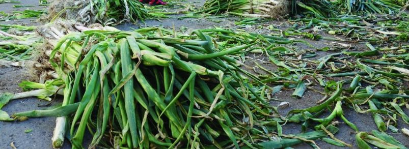 一年一度储菜季 你家买秋菜了吗