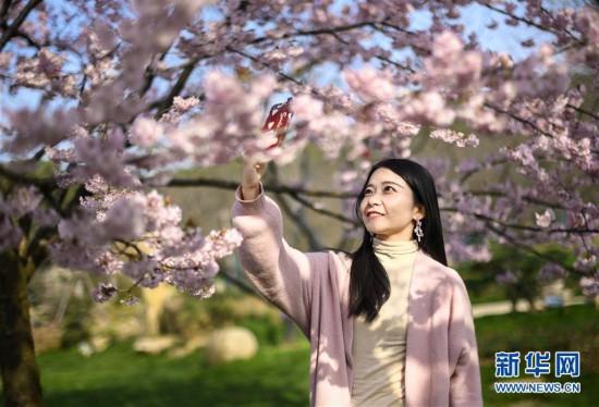 (社会)(2)武汉东湖樱花节开幕