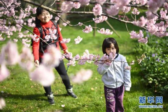 (社会)(4)武汉东湖樱花节开幕
