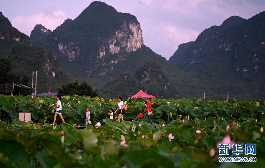 #(经济)(2)广西柳州:万亩荷塘迎客来