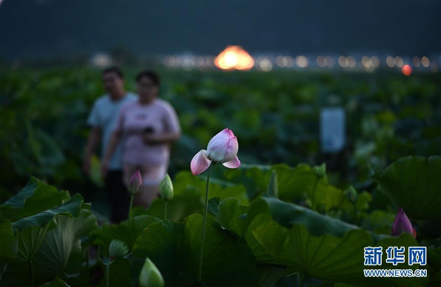 #(经济)(1)广西柳州:万亩荷塘迎客来